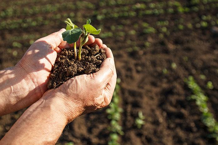 Czy prowadząc działalność rolniczą, można dostać kredyt w banku?